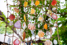 Collection of marine seashells hanging on grid Royalty Free Stock Photo