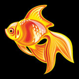 Collection of mascots: goldfish. Vector objects talismans Feng Shui on a black background Royalty Free Illustration