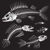 Collection mauvaise de Sceleton de poissons Images libres de droits