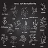 Collection of medicinal herbs for migraines relief. Hand drawn botanical vector illustration Royalty Free Stock Image