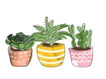 Collection mise en pot de centrales succulents et usines de maison illustration de vecteur