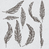 Collection of the monochrome feathers. Handmade work Stock Image