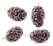 Collection of mulberry Royalty Free Stock Photo