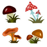 Collection of mushrooms Royalty Free Stock Photo