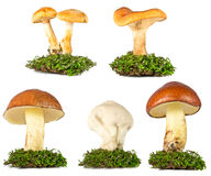 Collection of mushrooms in the grass isolated on white Stock Photography