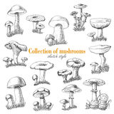 Collection of mushrooms in sketch style Royalty Free Stock Photos