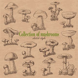 Collection of mushrooms in sketch style Stock Photo