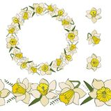 Collection of narcissus flowers. Pack with floral elements isolated on white royalty free illustration