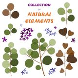 Collection of natural elements Royalty Free Stock Image