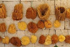 Collection of natural greek sponges Royalty Free Stock Photo