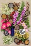 Collection naturelle d'herbe et de fleur Photos libres de droits