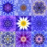 Collection of Nine Blue Concentric Flower Mandalas Kaleidoscope Stock Photo