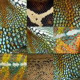 Collection of nine colorful reptile skin Royalty Free Stock Image