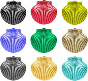 Collection of nine colorful sea shell Royalty Free Stock Photo