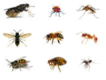Collection of Nine Insects Stock Photography