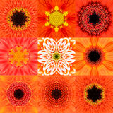 Collection of Nine Orange Concentric Flower Mandala Kaleidoscope Stock Image