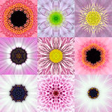 Collection of Nine Pink Concentric Flower Mandalas Kaleidoscope vector illustration
