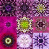 Collection of Nine Purple Concentric Flower Mandala Kaleidoscope Stock Photos