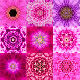 Collection of Nine Purple Concentric Flower Mandala Kaleidoscope Stock Images