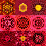 Collection of Nine Red Concentric Flower Mandalas Kaleidoscope Royalty Free Stock Photos