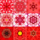 Collection of Nine Red Concentric Flower Mandalas Kaleidoscope Royalty Free Stock Photo