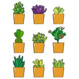 A collection of nine succulent plants royalty free stock images