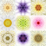 Collection of Nine White Concentric Flower Mandalas. Concentric Stock Photography