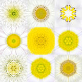 Collection of Nine White Concentric Flower Mandalas. Concentric Royalty Free Stock Image