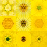 Collection of Nine Yellow Concentric Flower Mandala Kaleidoscope Stock Image