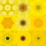 Collection of Nine Yellow Concentric Flower Mandala Kaleidoscope Stock Image