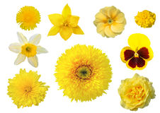 Collection of nine yellow flowers Royalty Free Stock Photography