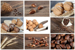 Collection of nut and seed images Royalty Free Stock Photography