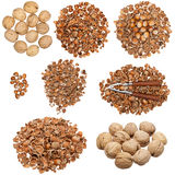 Collection of nuts and empty nutshells Royalty Free Stock Image