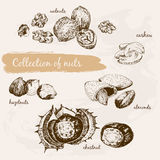 Collection of nuts Royalty Free Stock Photo