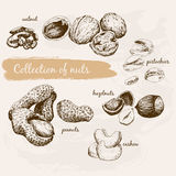 Collection of nuts Stock Image