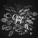Collection of  ocean fish Stock Image
