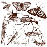 Collection Of Antique Hand Drawn Insects Butterflies And Beetles Royalty Free Stock Photography