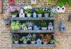 Free Collection Of Flowers And Bird Houses On Texel Island Royalty Free Stock Photography - 118847697