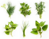 Free Collection Of Fresh Herbs Stock Photo - 15341590