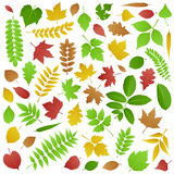 Collection Of Green And Autumn Leaves Royalty Free Stock Photography