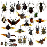 Collection Of Jewelry Beetle Isolated Stock Photos