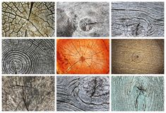 Free Collection Of Knotty Wood Textures Royalty Free Stock Photography - 140717517