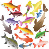 Collection Of Multi-colored Fishes Stock Image