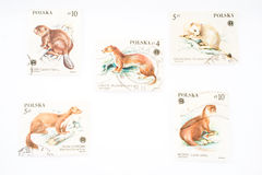 Free Collection Of Old Postage Stamps From Poland Stock Photo - 4265560