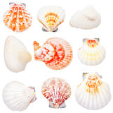 Collection Of Seashells Stock Photos