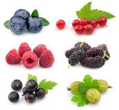 Collection Of Sweet Berries Stock Photography