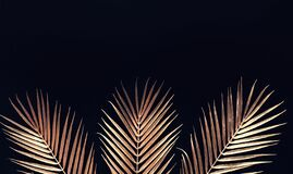 Free Collection Of Tropical Leaves In Gold Color On Black Space Background.Abstract Leaf Decoration Design Royalty Free Stock Image - 204720146