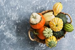 Free Collection Of Various Colorful Pumpkins In A Basket On A Gray Background. Top View, Copy Space Royalty Free Stock Photos - 125467068