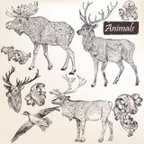 Collection Of Vector Hand Drawn Animals In Vintage Style Stock Photography