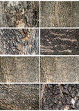 Collection of Old Wood Tree Texture Background Pattern. Stock Photography